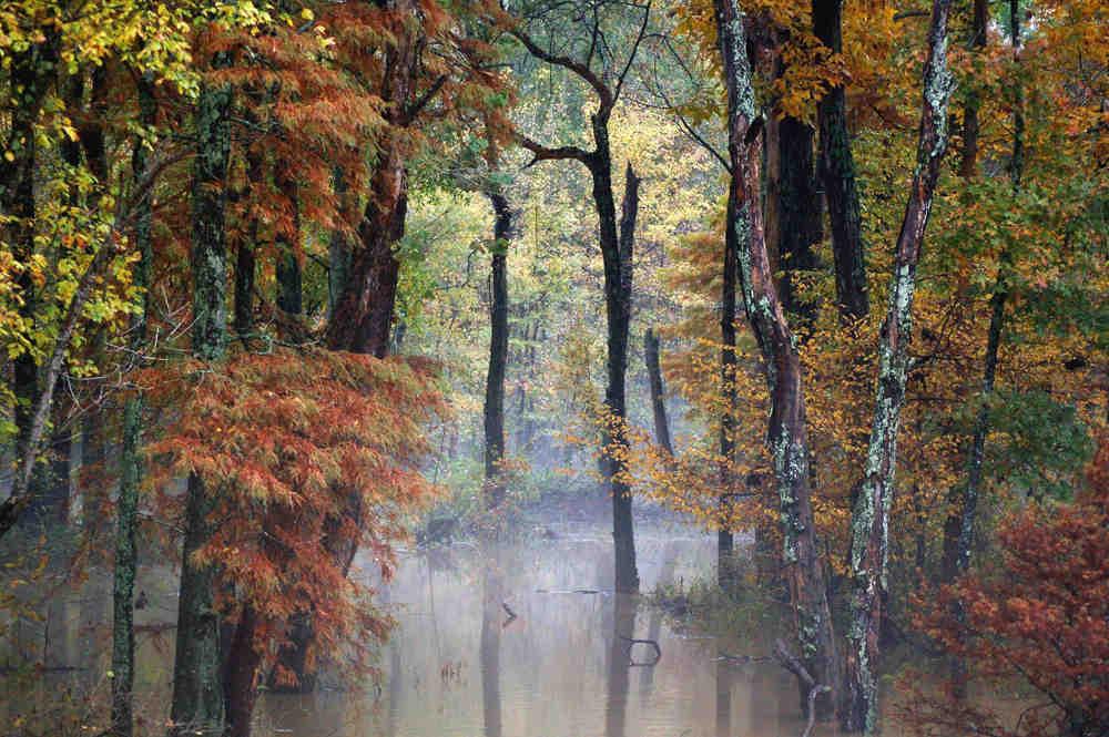 Obion Creek